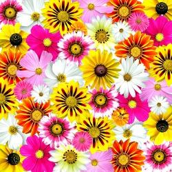 flowers-58592_640