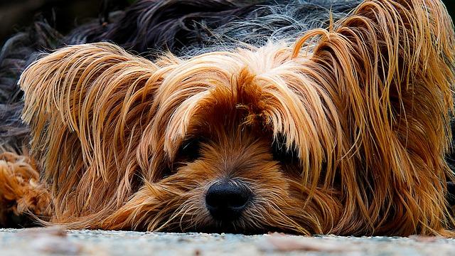 Uppvakta en hund du gillar med ett Hundogram